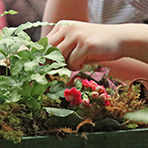 Kids 11am Fairy Garden Workshop for Mom
