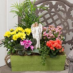 Angel Blessings Garden bloom colors vary $70.00 - $95.00