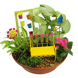 Fairy Gardens Flowers, Plants, Gift Baskets from VIVIANO Flower Shop