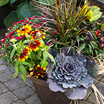 Porch Pot Workshop: fall design with hardy mums