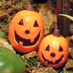Halloween Fairy Garden Workshop