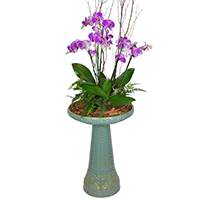 GH Hope In Bloom #157118O Viviano sympathy and memorial garden gift with orchid plants