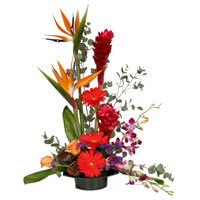 Vision #179009 Viviano Flower Shop mixed tropical floral sympathy arrangement: orchids,  birds of paradise, gerbera, roses