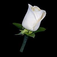 Rose Boutonniere #17BOUT331 Viviano classic prom, homecoming and special event design