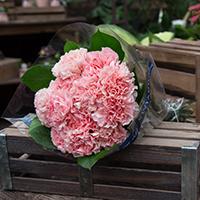 BU Carnations #19 Viviano