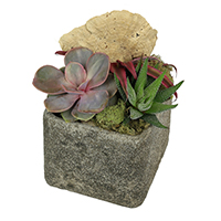 GH Urban #25917 Viviano   Flower Shop greenhouse succulent novelty garden in a cement cube   with dried mushrooms