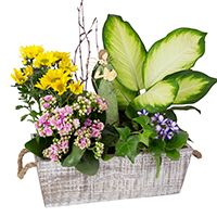 GH Angel Blessings Garden #32217 Viviano Flower Shop Spring greenhouse gift with green and blooming plants, angel keepsake