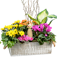 GH Angel Blessings Garden #32218 Viviano Flower Shop Spring greenhouse gift with green and blooming plants, angel keepsake