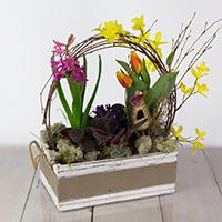 GH Bulb Garden #33321 Viviano