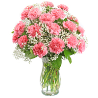 Parisian #3D Viviano  Flower Shop floral arrangement of 12, 18, or 24 carnations with baby's breath and bupleurum