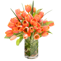 Simply Tulips #42615 Viviano  spring favorite: tulips arranged in vase with lily grass