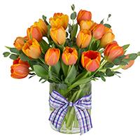 Simply Tulips #42620 Viviano