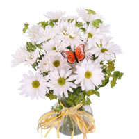 Simplicity #42815BW Viviano Flower Shop white daisies arrangement with a butterfly
