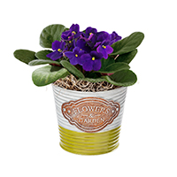 GH All Abloom 4in pot #43118 Viviano Flower Shop Spring greenhouse gift of a blooming plant in a decorative planter tin pot