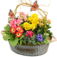 GH Springtime Garden #44117 Viviano Flower Shop greenhouse gift of green and blooming plants  in a rustic oval bucket container