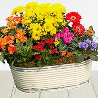 GH Watercolor Garden #44121 Viviano