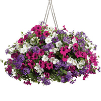 GH Hanging Garden  #44407 Viviano Flower Shop various blooming outdoor plants potted in a porch basket