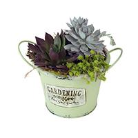 GH Flourish #44918G  Viviano  succulent garden planted in keepsake tin