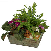 GH Kim's Secret Garden #45212 Viviano garden with ferns and violets