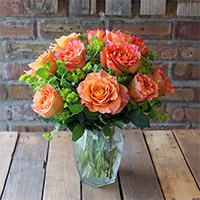 Peach Bellini #45716  Viviano short stem Free Spirit roses