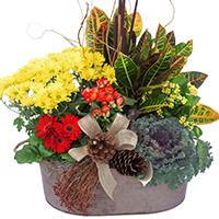 GH Autumn Abundance #47519 Viviano