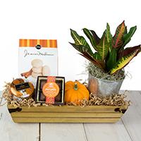 Pumpkin Spice Crate #47920 Viviano