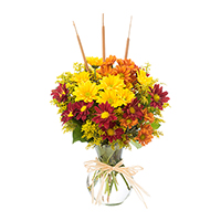 Delight-Fall Daisies #48316 Viviano Flower Shop autumn floral arrangement of daisy pompoms with cattails