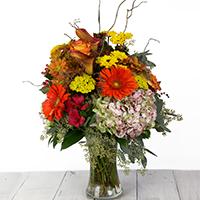 Harvest Beauty #48521 Viviano