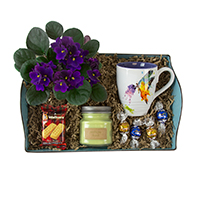 Thinking Of You #72417 Viviano Flower Shop  care package tray of goodies, gifts and blooming plant