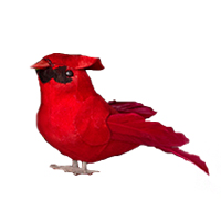 Cardinal Bird #78078923 Viviano