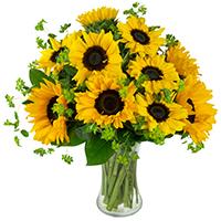Sunflower Delight #83519 Viviano