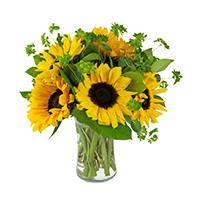 Sunflower Delight #83519 Viviano