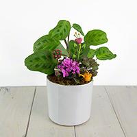 GH Nurture - Mini Fairy Garden BCPI #85621 Viviano
