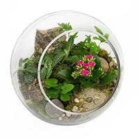 GH Globe Terrarium  #85819G Viviano