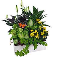 GH Box Garden #DGB19 Viviano  greenhouse gift